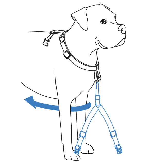 How to fit your 3 in 1 Harness